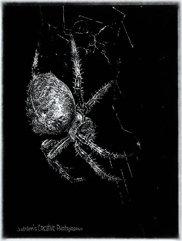 Super Spidee - ID: 12029403 © JudyAnn Rector