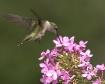 Flutter Phlox