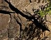 Rock Wall and Sha...