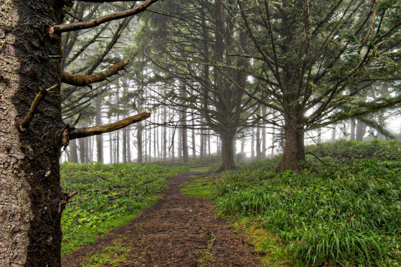 Pacific Northwest Fog