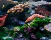 Coral Reef Specim...