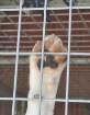 Let me out!!