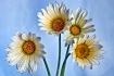 Cheerful Flowers