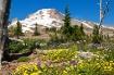 Mount Hood 2