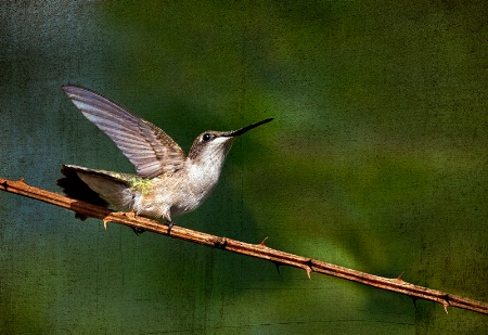 The Mighty Hummer