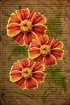 ~ Three Marigolds...