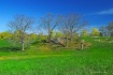 appleton farm ( g...