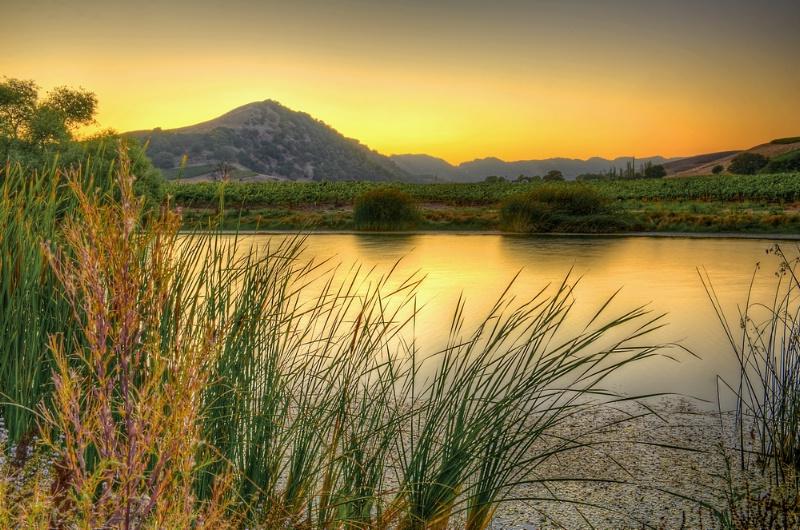 Sunset on the vineyard - ID: 12144782 © Lisza M. Coffey