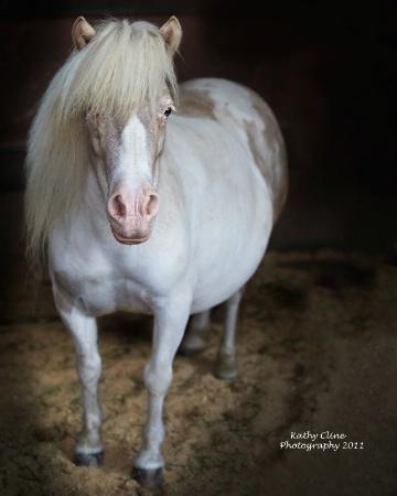 Pudgy Pony