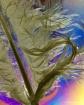 Wet Feather III