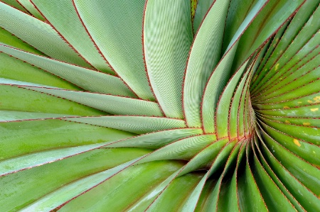 Agave Graphics