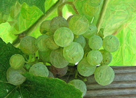 Green Grow the Grapes