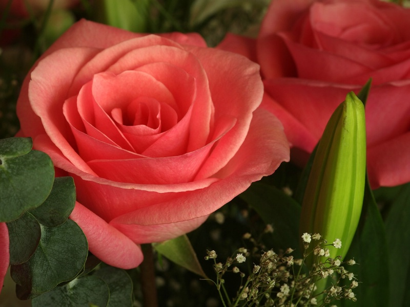 p8272508 - pink beauty - ID: 12161980 © Greg McCroskery