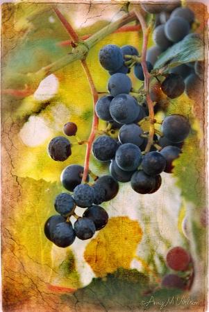 Vintage On The Vine