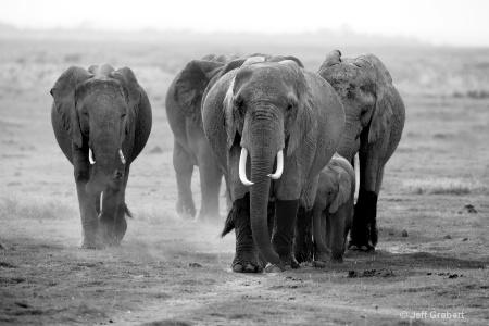 elephants  mg 9825