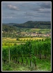 The Vineyards abo...