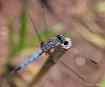 Dragonfly-Aerial ...