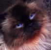 <b>+ Ol' Blue...