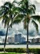 Palm Beach Skylin...