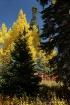 Colorado Gold 201...