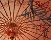 Asian Parasol