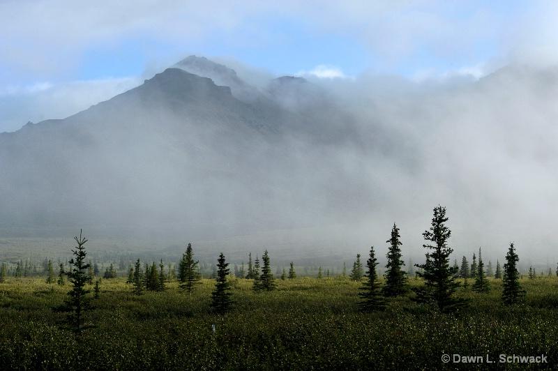 Misty Morning - ID: 12298913 © Dawn Schwack