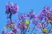 <b>+ Spring Time ...