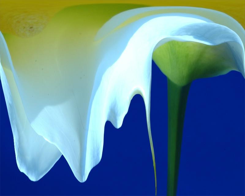 molten lily