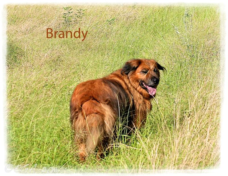 In memory of Brandy - ID: 12318966 © Emile Abbott