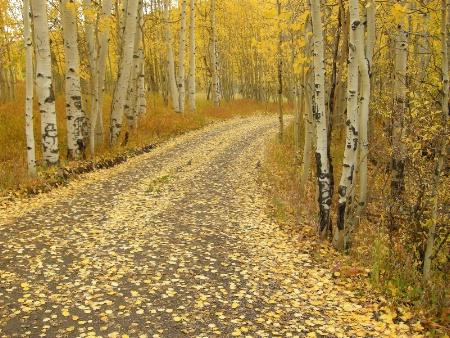Fall in Colorado #2