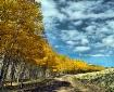 Follow the Yellow...