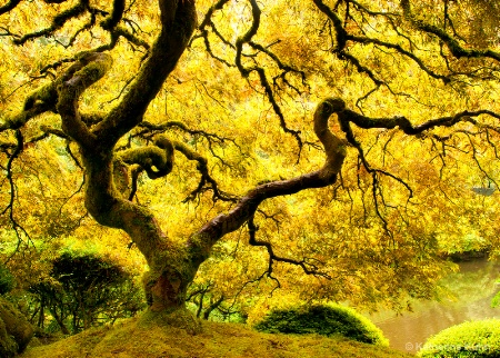 Photography Contest Grand Prize Winner - October 2011: Golden Glow
