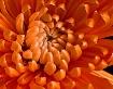 Fuego de Flor