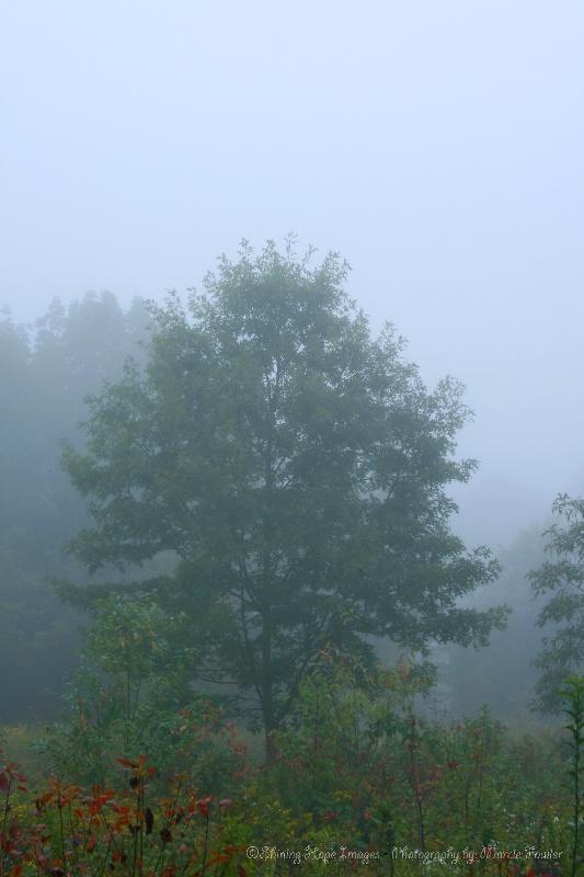 ~One Foggy Morning~