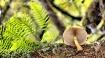 Oregon mushroom