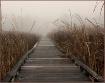 Walking in a Fog