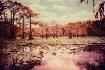 Caddo Lake in Fal...
