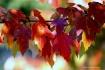 Seasonal Vibrance