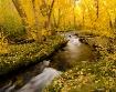 McGee Creek Autum...