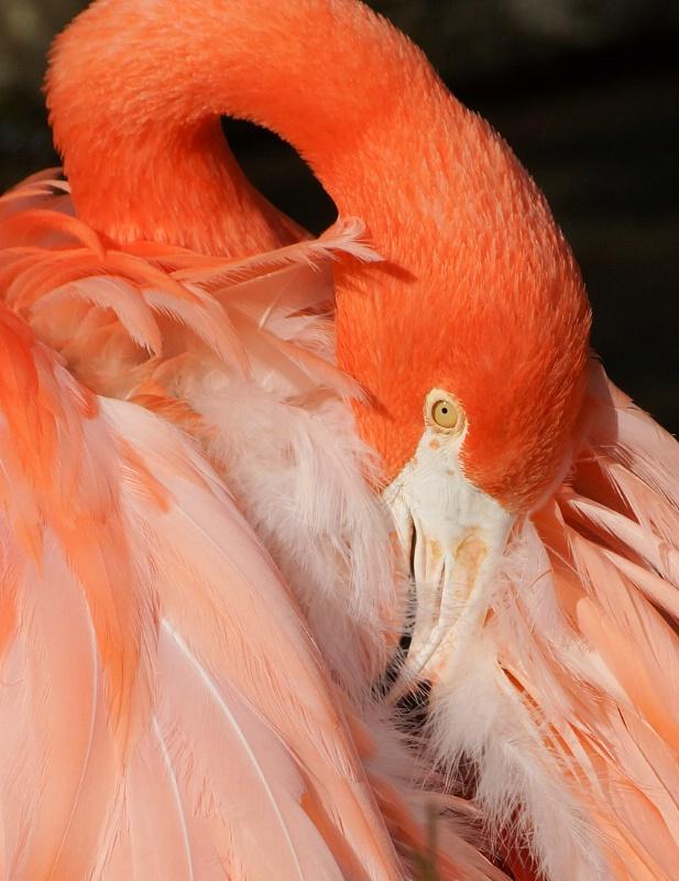 Flamingo Feather Detail