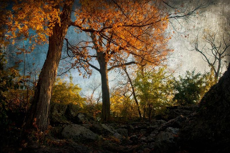On an Autumn Hike