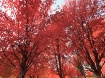 Fall Color Everyw...