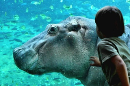 Watching the Hippo