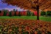 Autumn Masterpiec...