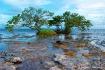 Mangroves at the ...