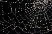 Web Drops
