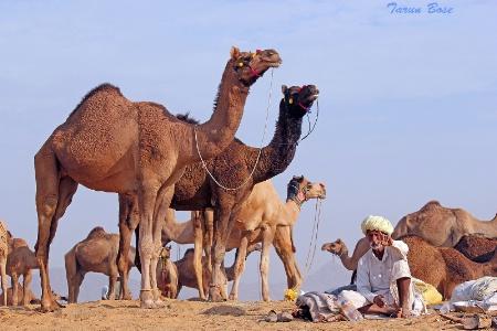 Pushkar Fair # 09.