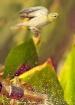 Water Droplet Del...