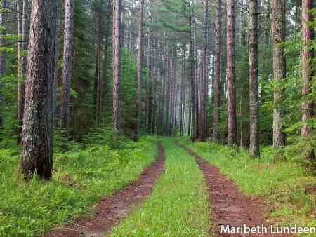 Beckoning Woods