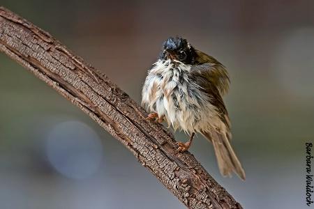Wet bird